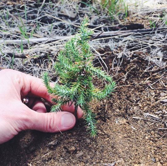 one-hand-planting-one-tree.jpg